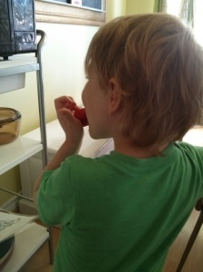 Jake snacking on tomatoes while I try to can spaghetti sauce