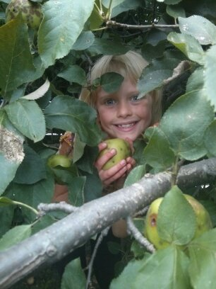 Raine apple picking